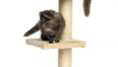 arbre à chat chaton